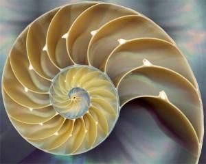01nautilus shell
