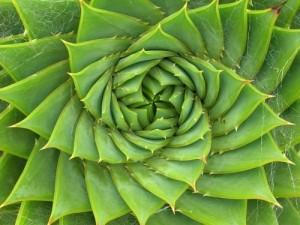 10fibonacciSpiralALOE