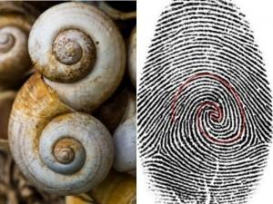 20fibonacci spiral